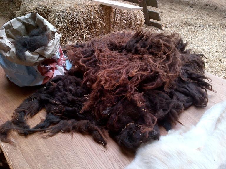 First sheepskin