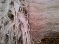 locks en carded wool