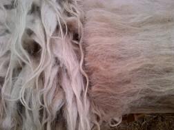 locks en carded wool