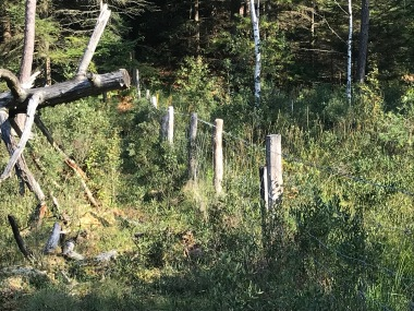 Track foto 3: Fences