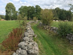 Track 8 km: Mossväg
