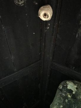 plafond_sauna